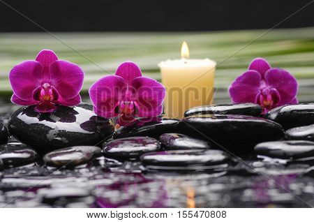 spa concept â??red orchid and green leaf ,candle