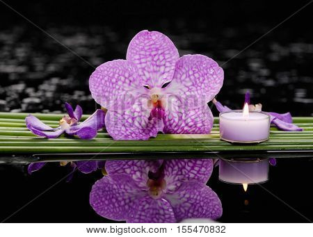 Still life with  orchid and candle