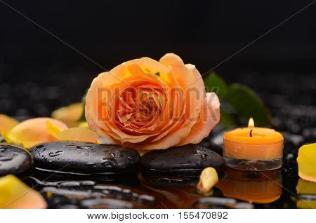 Spa still life with orange rose ,petals and candle on pebbles