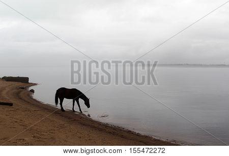 Landscape with brown horse near fog riverside