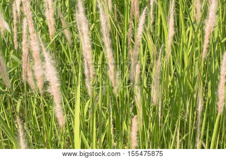 Meadows grass swaying with the wind that may blur for background.