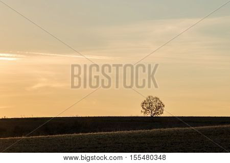 Sunset In Autumnal Landscape With Silhouette Of Solitaire Tree
