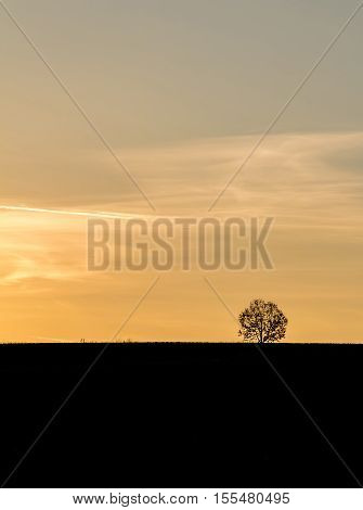 Golden Sunset In Landscape With Silhouette Of Solitaire Tree