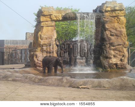 A beautifull photo of a female elephant and her bull taking a shower in their ground at Chester Zoo UK. poster