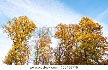 Amazing Autumnal Landscape With Colorful Trees