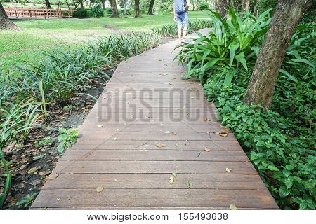 wooden walkway in the park with plants surrounded