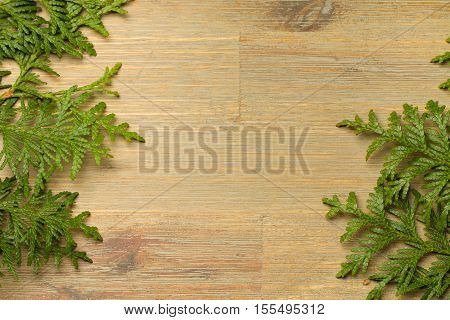 Green Thuja on a brown wooden board. Thuja on sides, Empty copyspace. Country, plant, green, simple, background, flat desk table