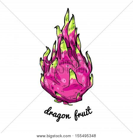 Pitaya or dragon fruit tasty nature asian diet delicious and inscription. Exotic pink tropical fresh fruit. vector illustration