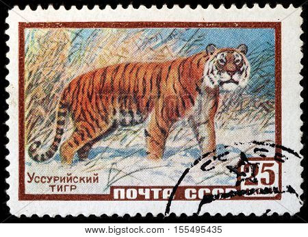 LUGA RUSSIA - NOVEMBER 6 2016: A stamp printed by USSR (RUSSIA) shows The Siberian tiger (Panthera tigris altaica) also known as the Amur tiger circa 1959