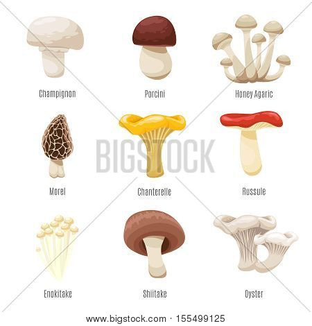 Edible mushrooms on white vector illustration. Mushroom of champignon and porcini, honey agaric and morel fresh mushrooms