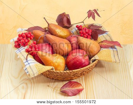 Pile of a European pears and red apples on a cotton checkered napkin bunches of rowan and branch of ivy in a small wicker basket on a light wooden surface