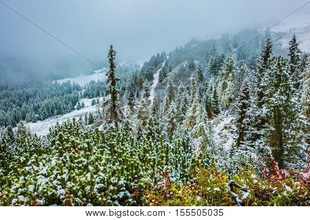 Alpine Pass Giau. Coniferous forest on mountain slopes covered with the first snow. Dolomites in Northern Italy