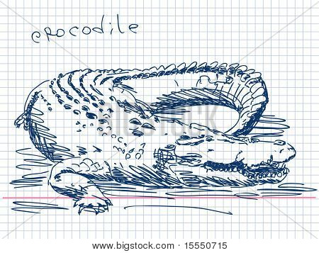 Hand drawn crocodile Vector