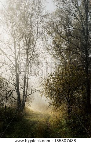 Autumn misty morning in the woods. The trail to the river
