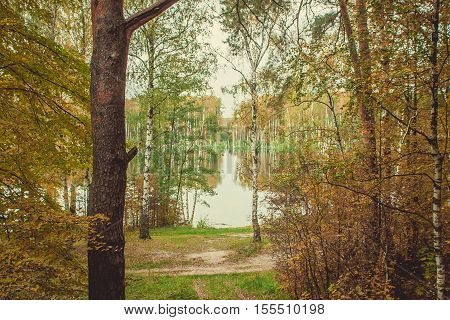 Yellow forest and lake in the autumn forest