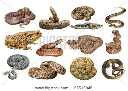 collection of herpetofauna isolation over white background