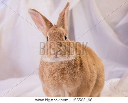 Adorable and cute domestic rabbit poses in soft light