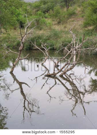Reflection Of A  Treetrunk In The Water