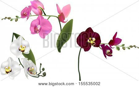 illustration with orchids isolated on white background