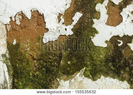 Close up of green mold fungus and peeling and flaking paint due to rising damp and lack of maintenance on exterior wall