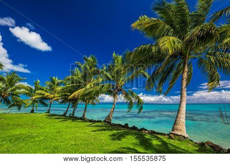 Tropical beach on north side of Samoa Island with many palm trees