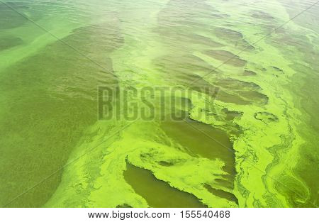 Natural patterns on Ukrainian river Dnepr covered by Cyanobacterias as a result of hot seasons.