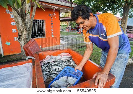 Pimping,Sabah-Oct 30,2016:Fishmonger preparing variety type of fish ready to sale at an open retail fish traditional market at Pimping,Sabah,Borneo on 30th Oct 2016.