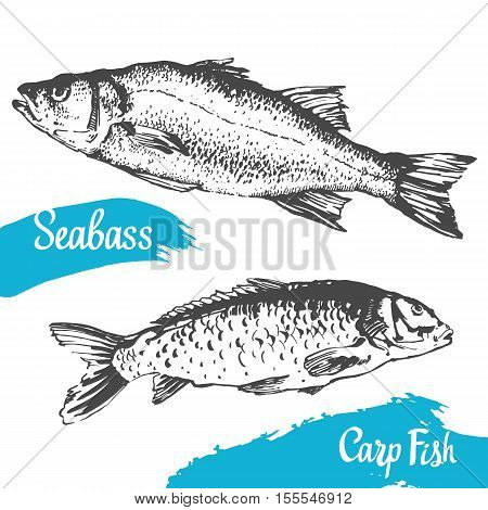 Hand drawn vector illustration with seabass and carp fish. Market. Seafood menu. Brush calligraphy elements for your design. Handwritten ink lettering.