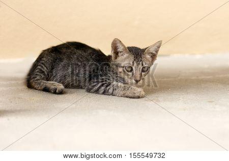 Stray Cat Hiding In Fear Mood