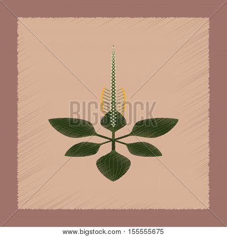flat shading style icon of plant Plantago poster