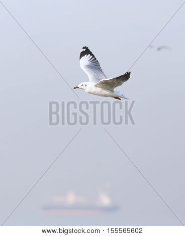 Flying seagull on windy day in gray tone. Blurry background is ocean liner and other seagulls.