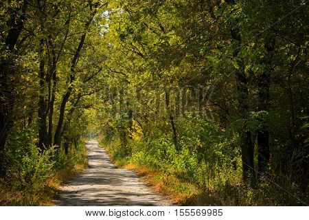 sunny young oak forest with road