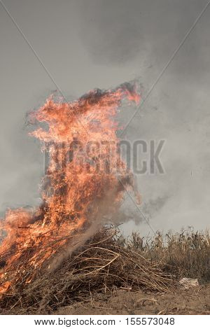 arson outdoors in a field of dry weeds
