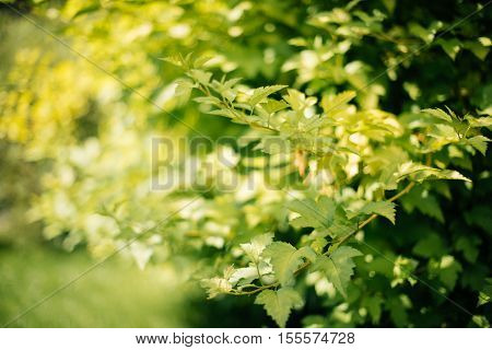 Grass in sunset light over blurred nature background with tree and bokeh