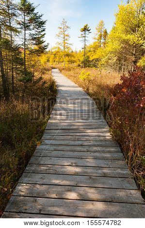 A boardwalk trail in a wooded area