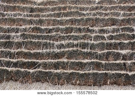 A fragment of the old thatched roof. Texture background
