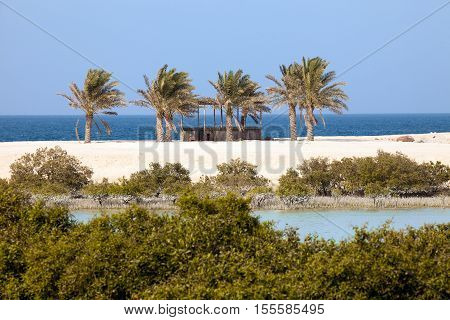 Mangroves and palm trees on Sir Bani Yas island UAE