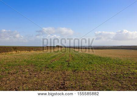 Straw Stubble Field In Autumn
