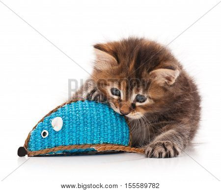Cute little kitten with toy mouse isolated on white background