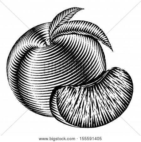 Engraved isolated old-styled engrave illustration of a peach