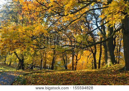 Sad to go! Eyes charm! Pleasant to me your farewell beauty - I Love the lavish withering of nature In crimson and gold-clad forests...