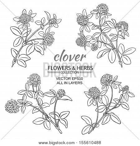 clover flowers vector set om white background