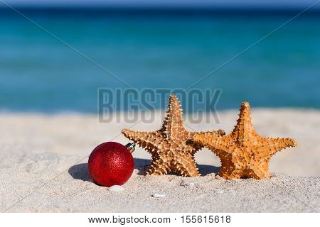 Tropical Christmas And New Year Celebration