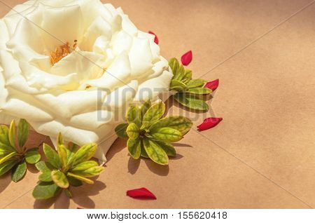 White Rose Surrounded By Red Petals And Green Leaves,left Aligned. Template With Flowers To Make Car