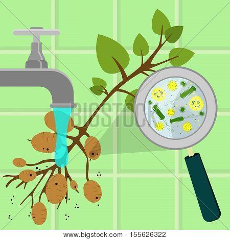 Washing Contaminated Potato Tree