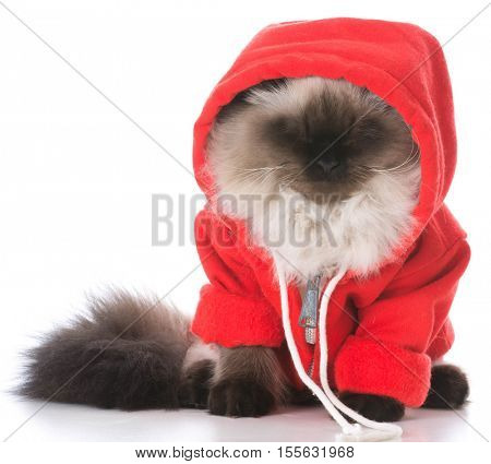 ragdoll cat wearing red sweater on white background