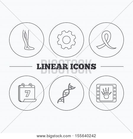 Phlebology, DNA and X-ray icons. Oncology awareness ribbon linear sign. Flat cogwheel and calendar symbols. Linear icons in circle buttons. Vector
