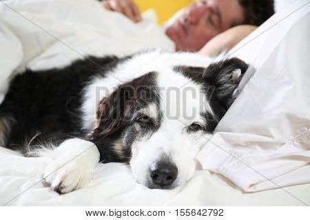 dog on the bed with his head on the pillow beside his sleeping owner