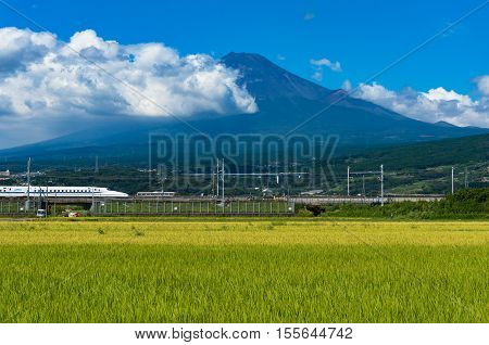 Shizuoka prefecture Japan - September 3 2016: Bullet train Shinkansen travels along bright ripe rice field paddy with iconic Mount Fuji volcano on the background. Iconic Japan sightseeings