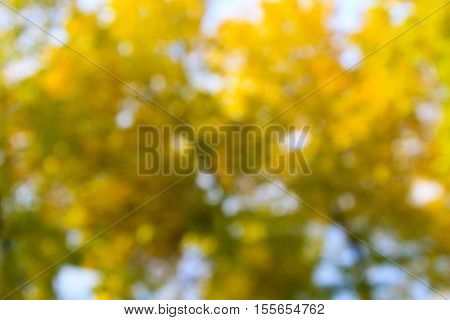The yellow blurred abstract background. Natural bokeh